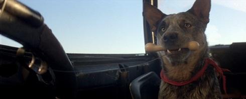 Il cane di Mad Max