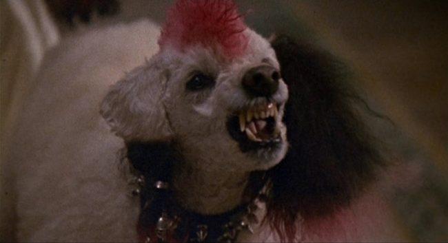 Gonk il cane di Elvira
