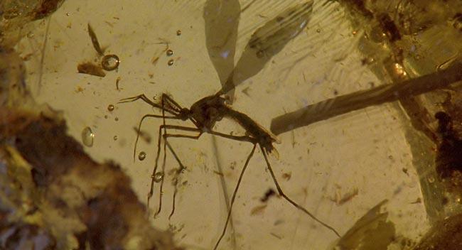 zanzara nell'ambra di Jurassic Park